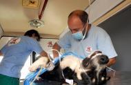 Kötelező az ebek sterilizálása