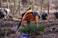 Erdőtelepítés